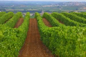 vins bio du languedoc vins igp