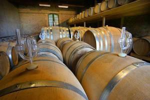 vignoble bio du languedoc vins igp
