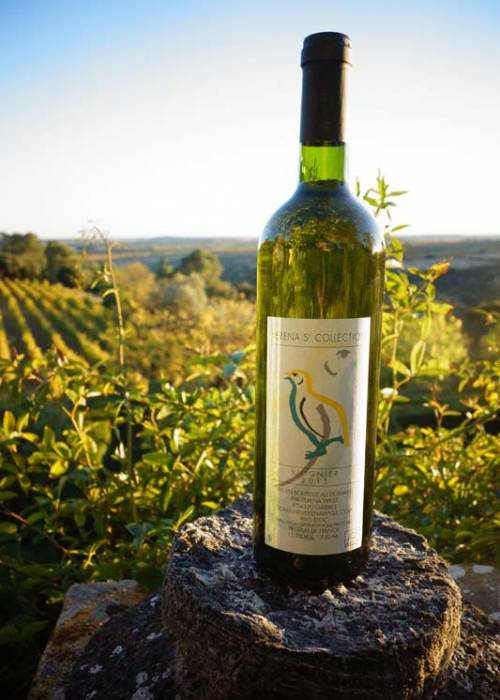 vin blanc viognier bio igp languedoc france